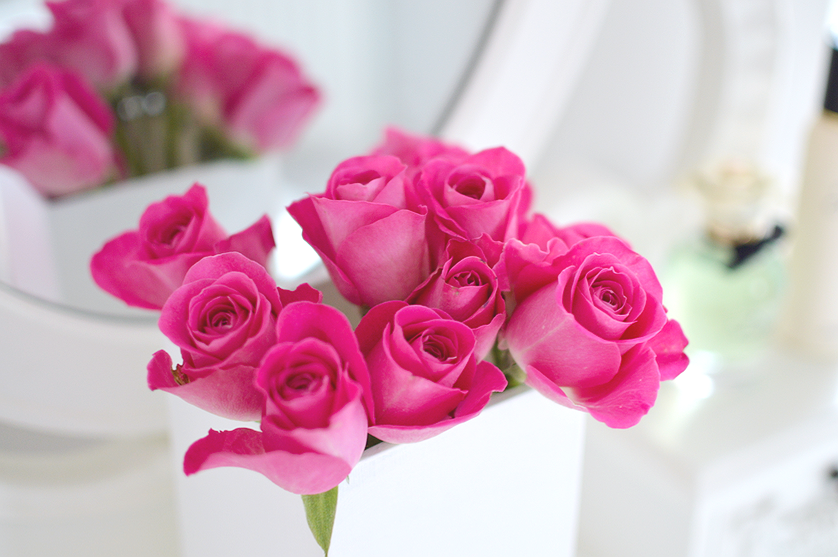 pink roses photography